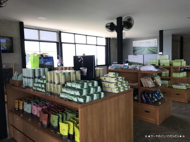 Choui Fong Tea Plantation 茶畑 チェンライ (5)