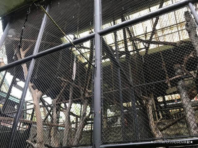 Dusit Zoo ドゥシット動物園 タイ カバ 最古 (2)