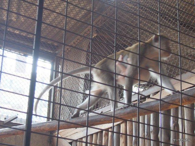 パタ 動物園 バンコク PATA ZOO