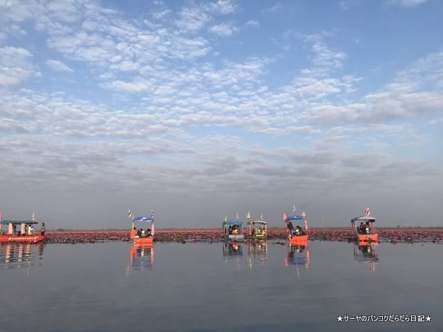 赤い蓮の池 Red Lotus Lake 絶景 2019 オススメ (12)