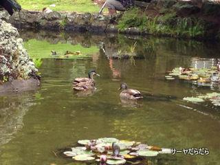 20121119 winter garden 21