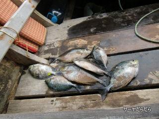 20120403 tour fish 7