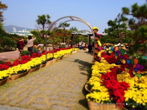 益山千万本菊祭り