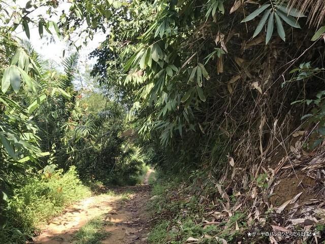バギー ジャングルツアー カオラック (11)