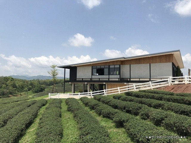 Choui Fong Tea Plantation 茶畑 チェンライ (2)