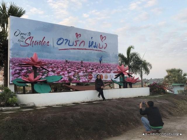 赤い蓮の池 Red Lotus Lake 絶景 2019 オススメ (3)