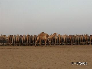 20111230 sabaku 6