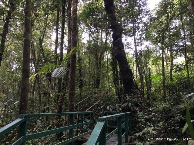 03 Kinabalu park Ohrkid (9)