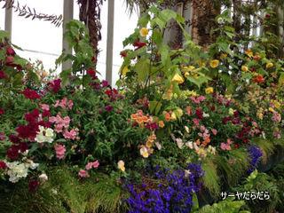 20121119 winter garden 4