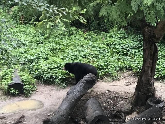 Dusit Zoo ドゥシット動物園 タイ カバ 最古 (5)