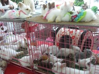 20090718 ウサギ 2