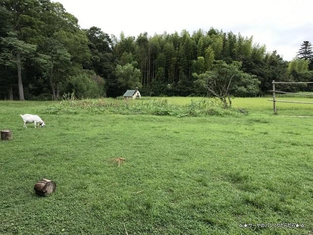 ライステラスカフェ 千葉 いすみ市 岬町 CHIBA (3)