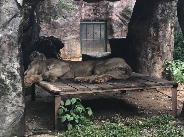 Dusit Zoo ドゥシット動物園 タイ カバ 最古 (29)