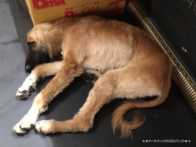 LOL 24 cafe - Lair Of Laziness dog cafe bangkok