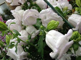 20121119 winter garden 11