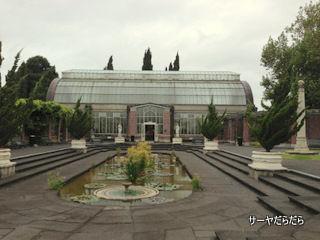 20121119 winter garden 19