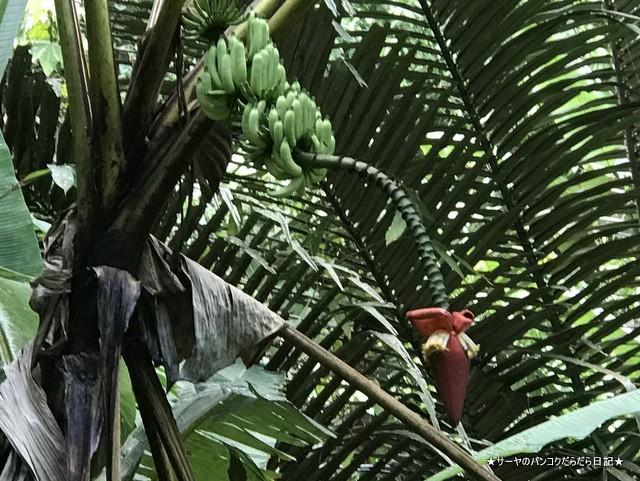 バギー ジャングルツアー カオラック (5)