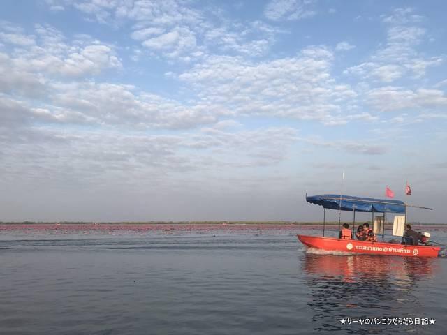 赤い蓮の池 Red Lotus Lake 絶景 2019 オススメ (10)