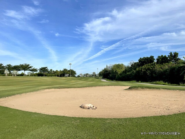 rose garden golf タイ ゴルフ (8)