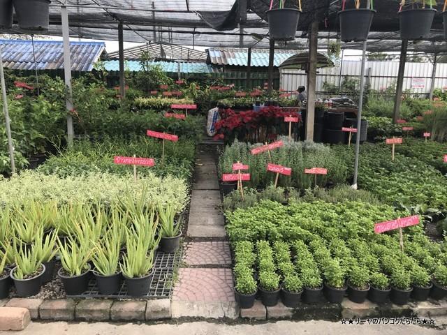 園芸市場 ナコンナヨック Klong 15 Tree Market Rangsit (7)