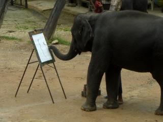 20081009 elephant camp 4