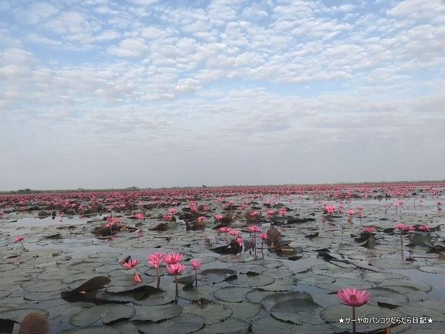 赤い蓮の池 Red Lotus Lake 絶景 2019 オススメ (14)