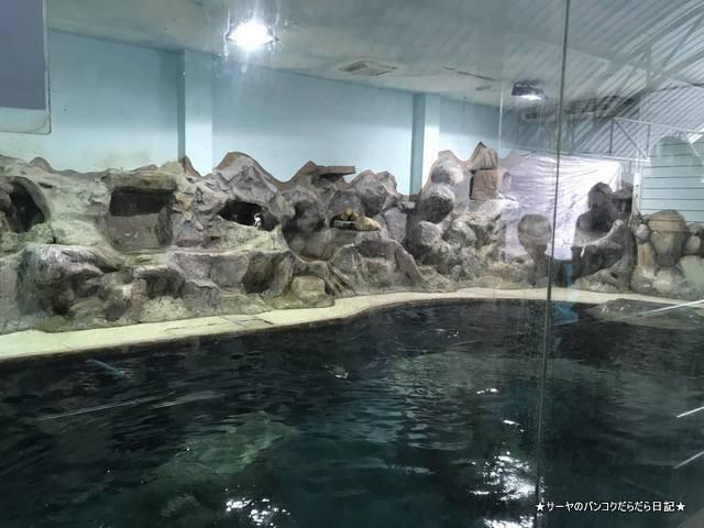 Dusit Zoo ドゥシット動物園 タイ カバ 最古 (19)
