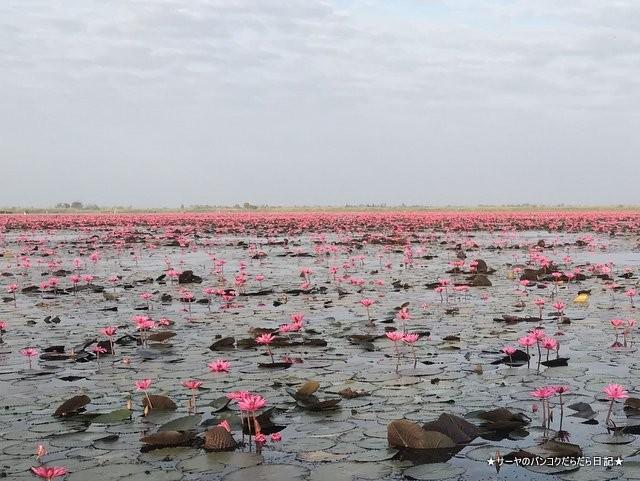 赤い蓮の池 Red Lotus Lake 絶景 2019 オススメ (13)