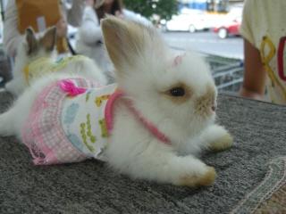 20090718 ウサギ 3