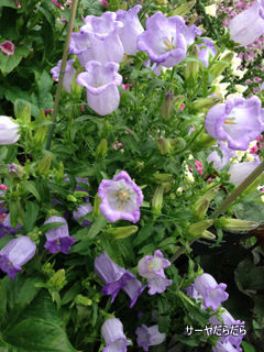 20121119 winter garden 9
