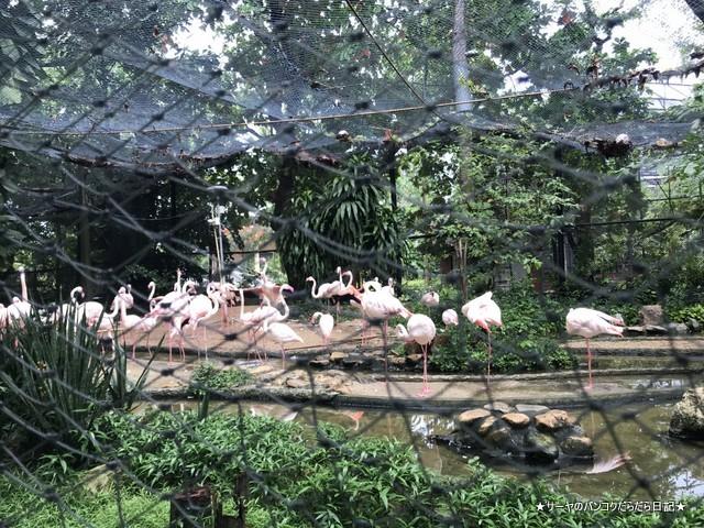 Dusit Zoo ドゥシット動物園 タイ カバ 最古 (18)