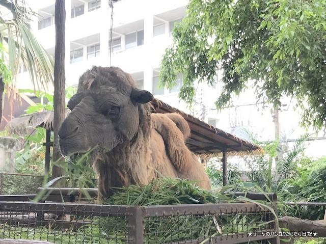 Dusit Zoo ドゥシット動物園 タイ カバ 最古 (38)