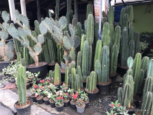園芸市場 ナコンナヨック Klong 15 Tree Market Rangsit (11)