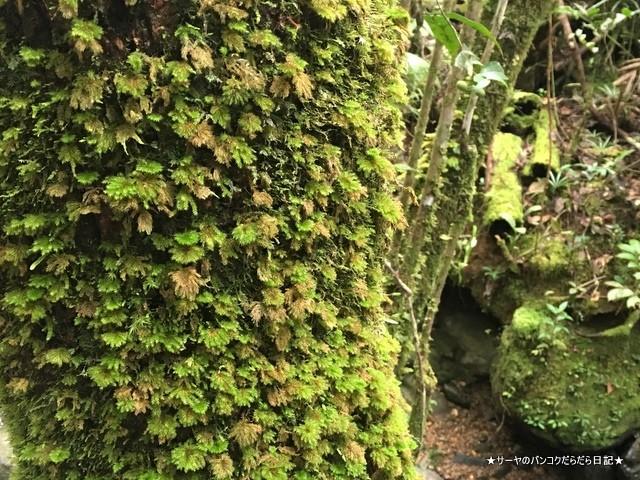 03 Kinabalu park Ohrkid (15)