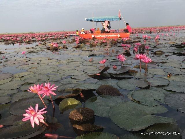赤い蓮の池 Red Lotus Lake 絶景 2019 オススメ (16)