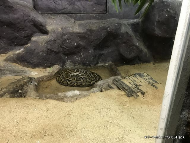 Dusit Zoo ドゥシット動物園 タイ カバ 最古 (31)