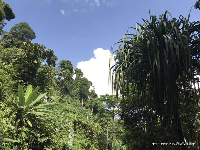 バギー ジャングルツアー カオラック (10)