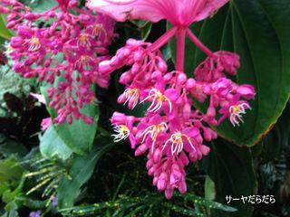 20121119 winter garden 15