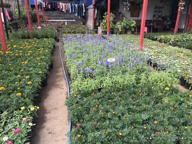 園芸市場 ナコンナヨック Klong 15 Tree Market Rangsit (9)