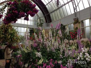 20121119 winter garden 6