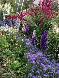 20121119 winter garden 3