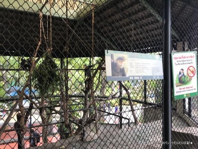 Dusit Zoo ドゥシット動物園 タイ カバ 最古 (3)