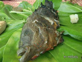 20120403 tour fish 6