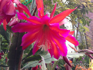 20121119 winter garden 18