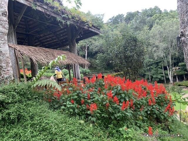 メーファールアン植物園 Mae-Fah-Luang-Arboretum (6)