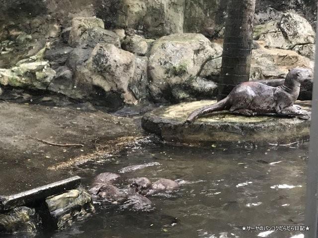 Dusit Zoo ドゥシット動物園 タイ カバ 最古 (26)