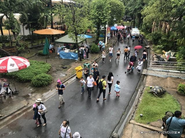Dusit Zoo ドゥシット動物園 タイ カバ 最古 (4)