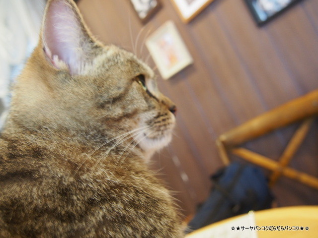 Purr Cat Cafe Club 猫カフェ バンコク