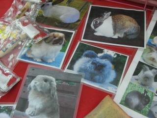20090718 ウサギ 5
