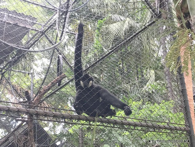 Dusit Zoo ドゥシット動物園 タイ カバ 最古 (17)